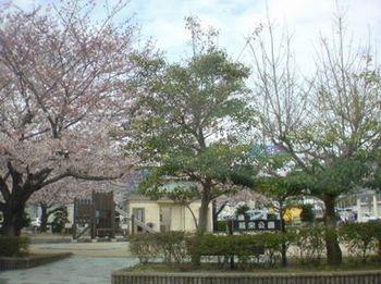 シビック桜③*.JPG